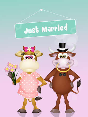 Wedding of cows