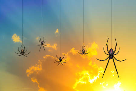 spider web: spiders at sunset Stock Photo