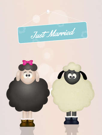 sheeps in love