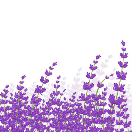 lavender frame Stock fotó