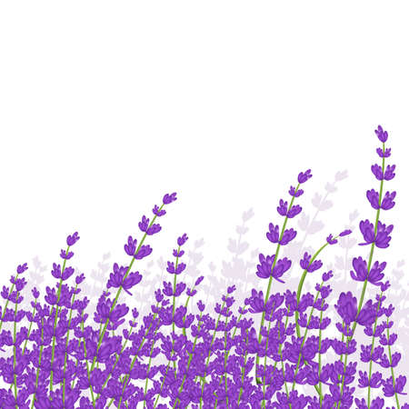 lavender frame Foto de archivo