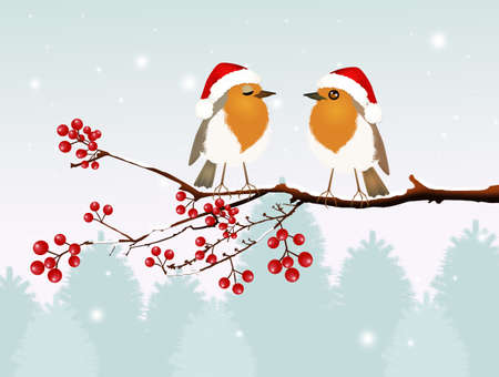 robin couple at Christmas Stock Photo