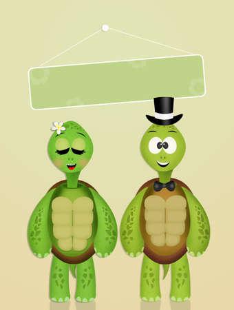 El matrimonio de las tortugas Foto de archivo - 93051152
