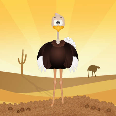 funny ostrich in the desert