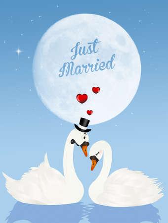 Wedding of swans in the moonlight