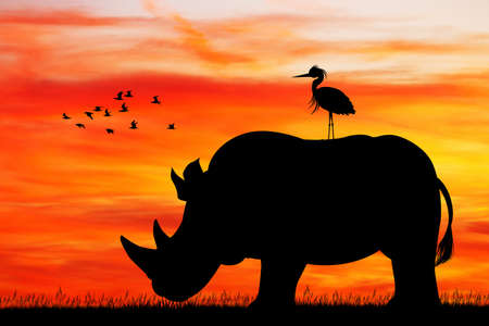 rhino silhouette at sunset