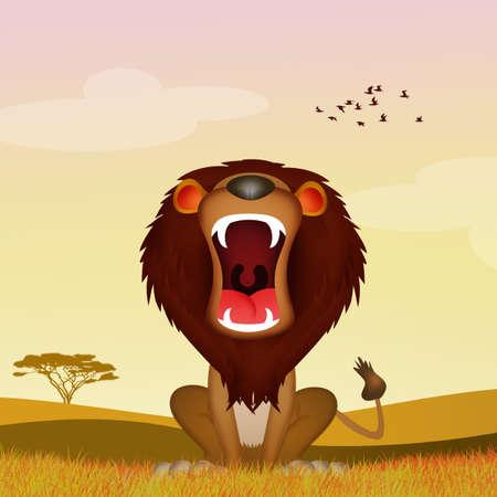 lion roars in the savannah Stockfoto