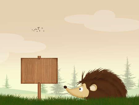 illustration of porcupine