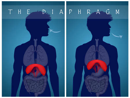breathe with the diaphragm