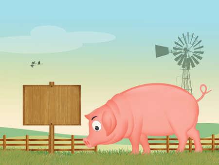 illustration of pig Stockfoto