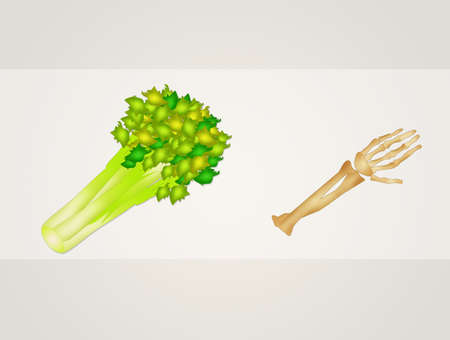 celery and bone benefits Stock Photo