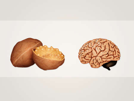 the walnut looks like the brain Stock Photo