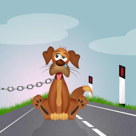 Abandoned dog on the roadside