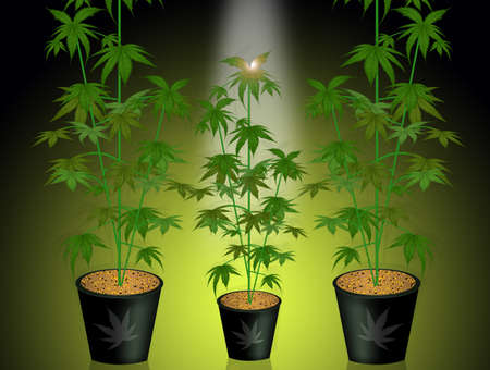 grow marijuana plants concept vector illustration