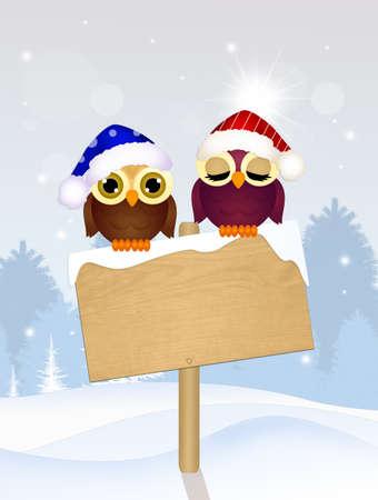 owls in winter landscape