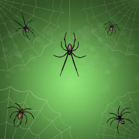 illustration of spiders net