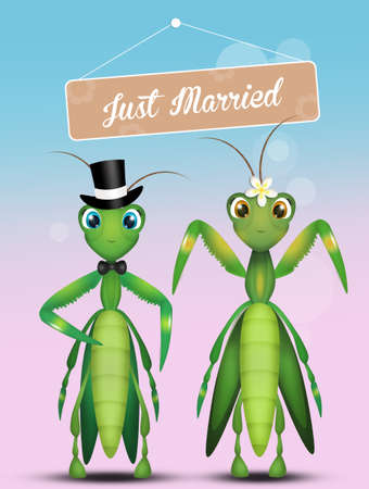 Wedding of mantis Stock Photo