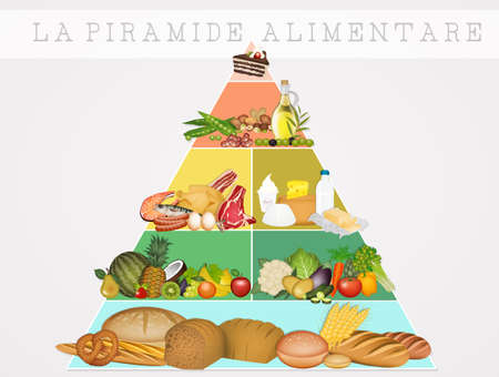 illustration of the food pyramid