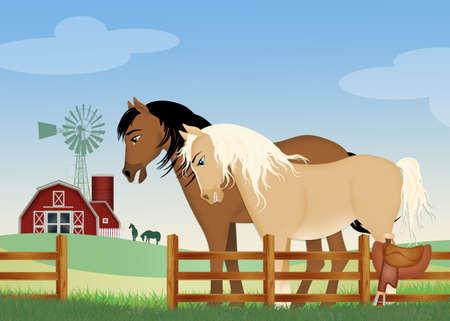 pair of horses on the farm