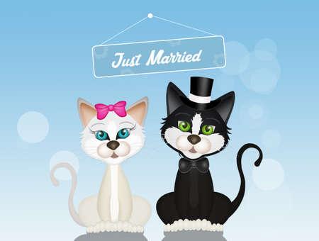 gatti coniugi con sfondo isolato.