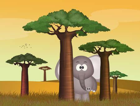elephant plays among the baobabs