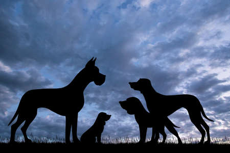 various breeds of dogs at sunset