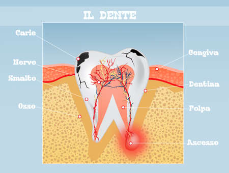illustration of the tooth scheme Stock Photo