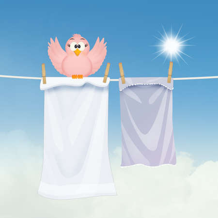 little bird on clothes hanging in the sun