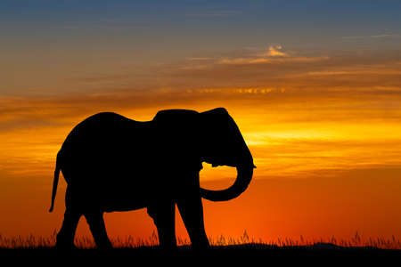 illustration of elephant silhouette at sunset Фото со стока