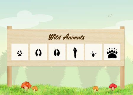 footprints of wild animals in the forest Stok Fotoğraf