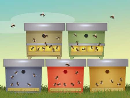 bee colonies in beehives