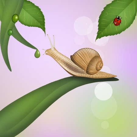 illustration of snail on leaf Stok Fotoğraf