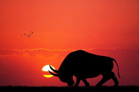 bull at sunset