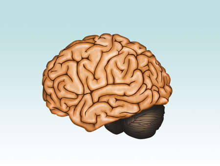 illustration of the brain Stock Photo