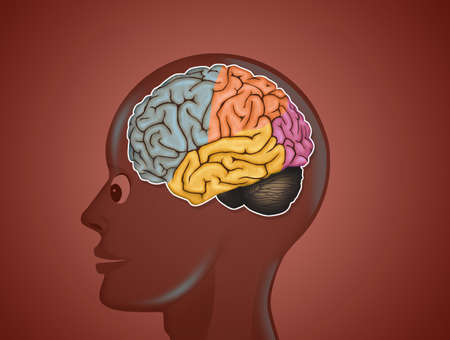 illustration of brain anatomy Stock Photo