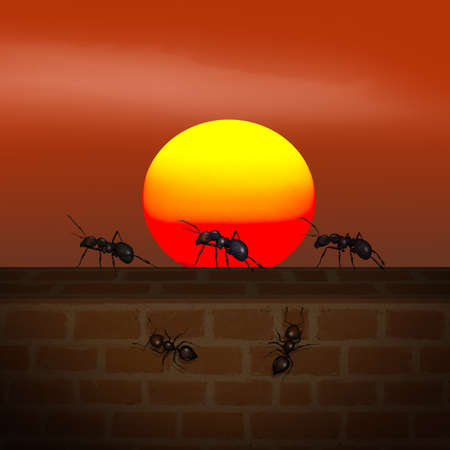 ants on the wall at sunset