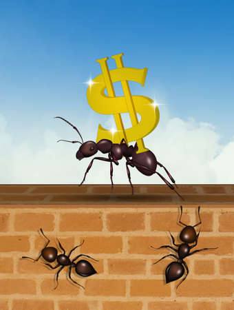 ants team up for success