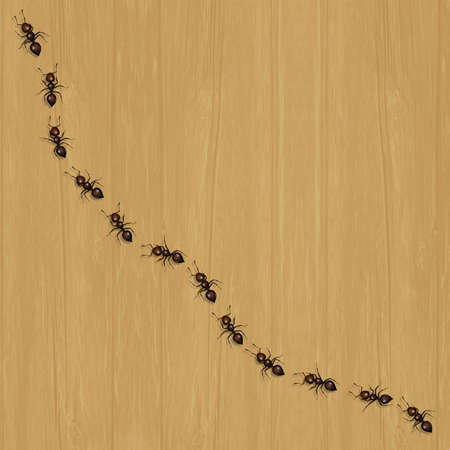 illustration of ants on the floor