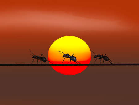 ants on wire at sunset
