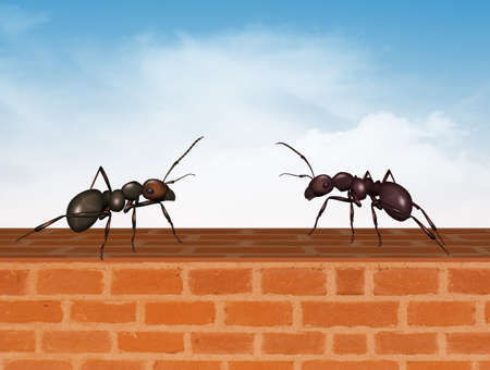 two ants on the wall Imagens - 130019396