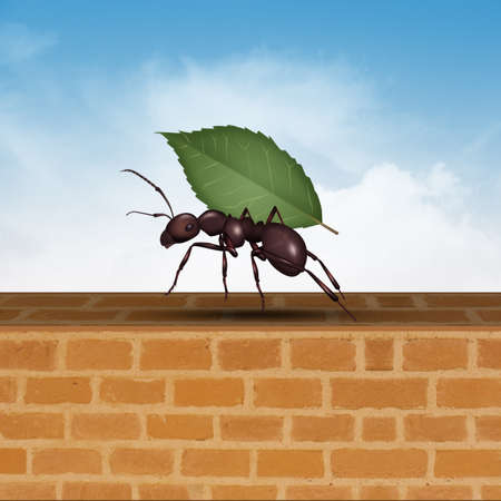 ant with leaf Imagens