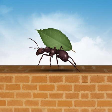 ant with leaf Reklamní fotografie