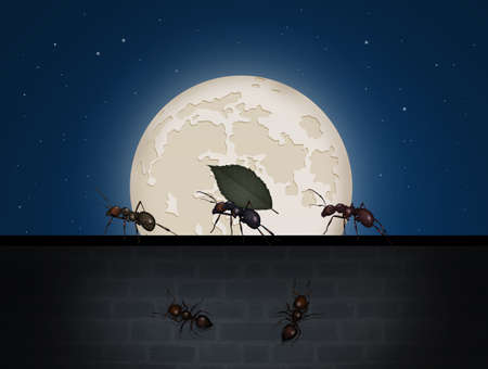 ant in the moonlight