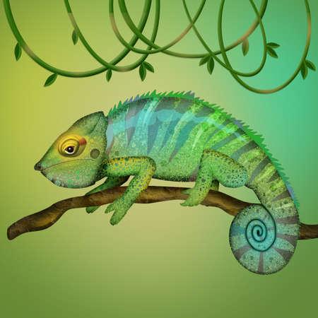 illustration of chameleon 스톡 콘텐츠