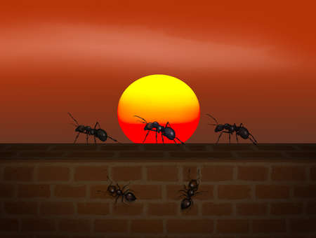 illustration of ants at sunset