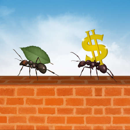 ants and the concept of success