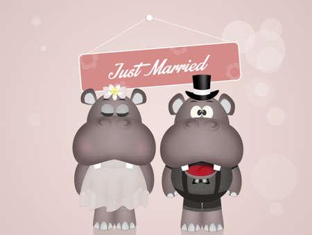 Matrimonio di ippopotami