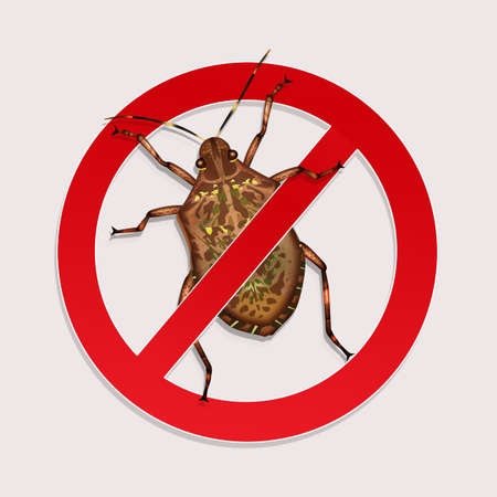 stop the bedbugs