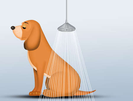 how to wash the dog