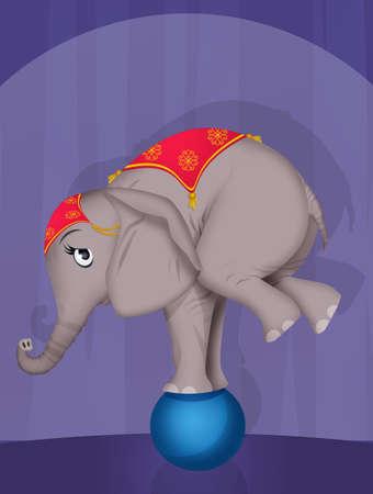 elephant on ball